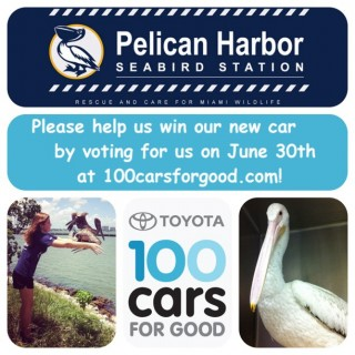 pelican Harbor Seabird Station 100 cars for Good Toyota